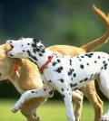 Dog Events in San Diego