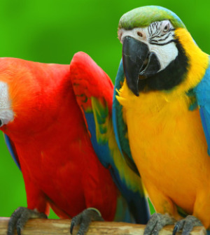 Picnic for the Parrots