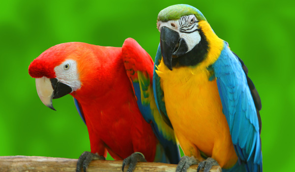 Picnic-for-the-Parrots-SoCal-Parrot-Charity-Events-Best-Charities-for-Animals-For-A-Good-Cause